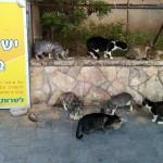 נתניה: פעולות עיקור וסירוס חתולים תורחבנה