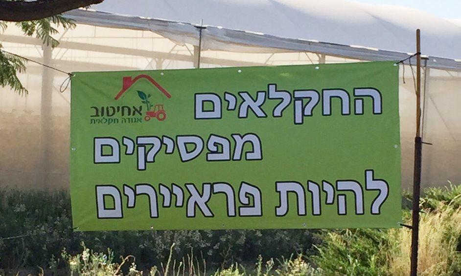 מחאת המלפפונים: חקלאי עמק חפר הצטרפו למחאה – אולטימטום לרשתות השיווק