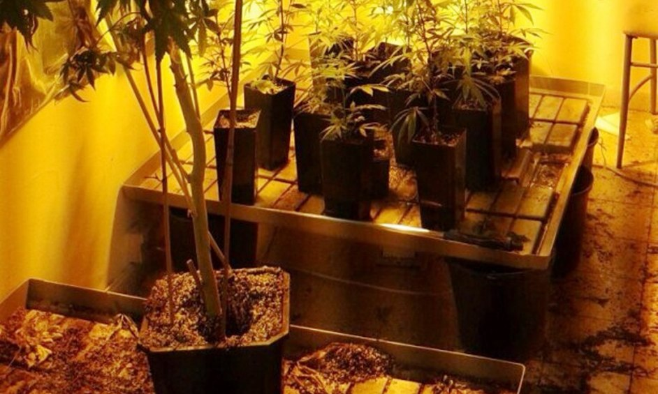 נתניה: גידלו סמים סמוך לבית קברות