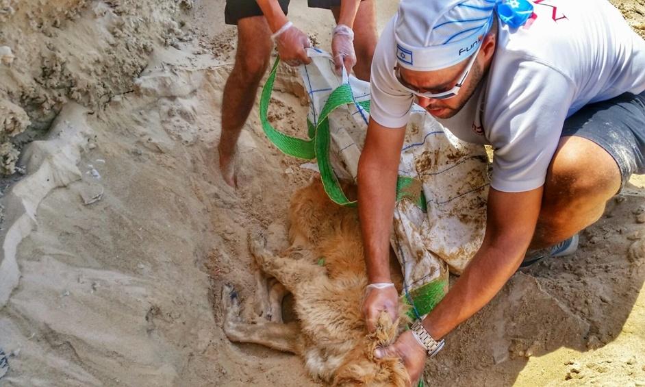 נתניה: החשד – כלב הוטבע בים