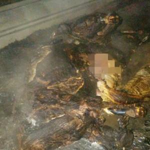 אחד מפגרי הסוסים שנשרפו למוות. צילום דוברות כיבוי אש