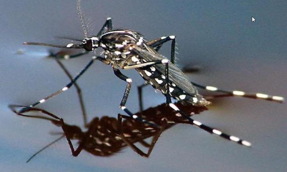 יתושים נגועים בקדחת הנילוס התגלו בנתניה