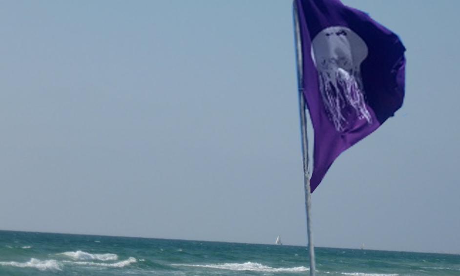 חופי נתניה: המדוזות כבר פה