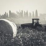 מחוברים לאדמה/ צילום נורית מוזס