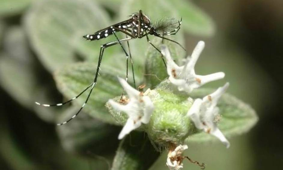 נתגלו יתושים נגועים בקדחת הנילוס