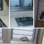 פינת החי בנתניה – עכברים, חולדות ויתושים